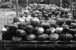 Pumpkins and Winter Squashes from Magelang's Pakis